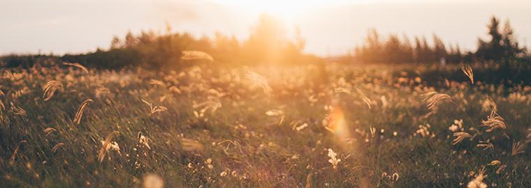 Hehku Hemmottelu wellness hyvinvointivalmennus hyvinvointi Jyväskylä